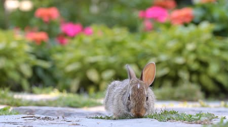 domestic animals : Young rabbit eating grass in the garden