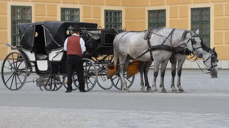 konie : Carriage with horses for hire in Vienna Austria