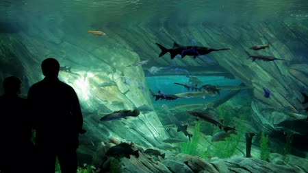 аквариум : Visitors watching at the fishes in the aquarium