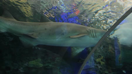reen : Aquarium with shark Stock Footage