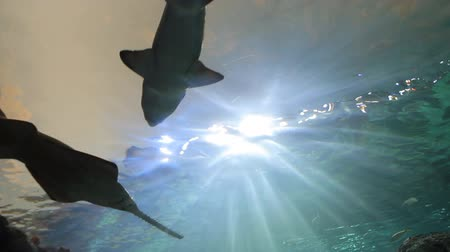 whale : Aquarium with shark Stock Footage