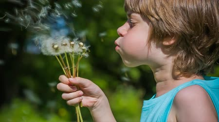 dmuchawiec : Cute Boy blowing dandelion seeds in spring. High quality video converted from 14 bit raw  Wideo