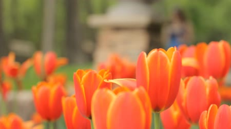 relaks : Botanical garden tulip flower bed and people background it