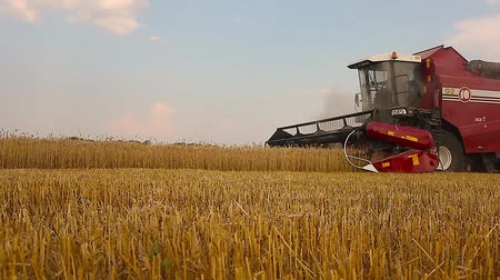 kombájn : Combine harvester in action on wheat field. Harvesting is the process of gathering a ripe crop from the fields. Stock mozgókép