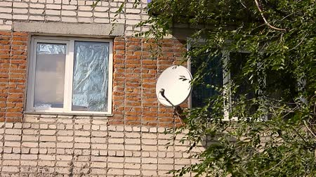 brickwall : Satellite dish on a brick wall. Many satellite dishes on the side of the apartment building.