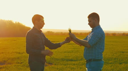 фермеры : Two American farmers communicate in the field. Two businessman farmers shake hands with each other firmly. They are examining corp. Crop plant examined by two farmers. Стоковые видеозаписи