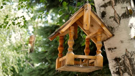 karmnik : Bird feeders. tree house for the birds, cheerful apartment.