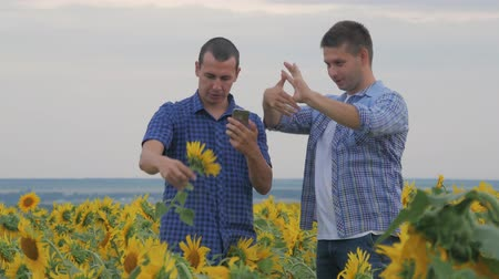 sklízet : Two friend farmer rancher ,funny around situation on the sunflower field. Partner farmers men analyzing sunflower field collaboration and talking about harvest.