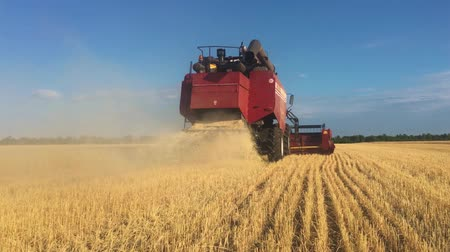 trator : Combine harvester gathers the wheat crop. Wheat harvesting shears. Combines in the field Food industry concept.