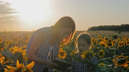 children only : A family farmer with a tablet in the field. Pretty female farmer and her beautiful daughter talk about sunflower in the field. Farming concept. Stock Footage