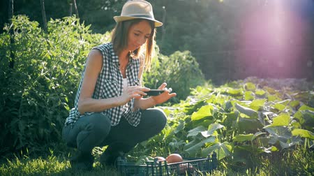 make photo : Farmer woman taking photo of harvest vegetables with cellphone in garden.