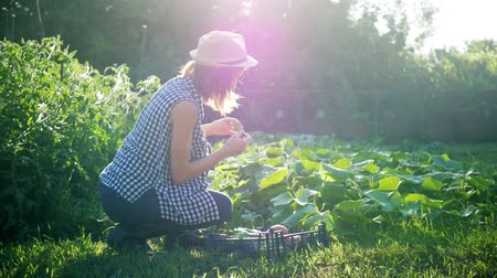 клетчатый : Farmer girl with vegetables crop in the kitchen garden. Harvest time. Family farmers. The concept of organic food. Стоковые видеозаписи