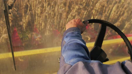 трактор : Man driving a combine and harvesting the sunflower.