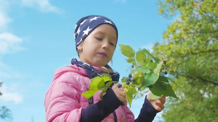 zwarte bes : Little girl eating blackberries in forest in the autumn.