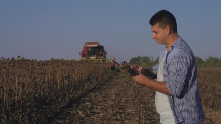 удовлетворенный : Farmer working on tablet computer in harvest ready sunflower crop field with combine in background. Стоковые видеозаписи