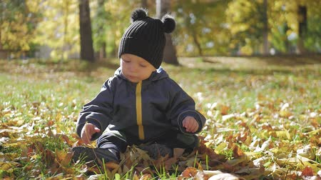 caído : Little baby boy sitting on grass and fallen leaves in park on bright and sunny early autumn day looking at yellow leaf in hand and smiling. Happy baby boy throws autumn leaves and laughs outdoors.