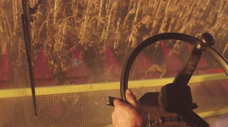 agricultural lands : Man driving a combine and harvesting the sunflower.