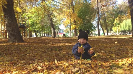 wrzesień : Little baby boy sitting on grass and fallen leaves in park on bright and sunny early autumn day looking at yellow leaf in hand and smiling. Happy baby boy throws autumn leaves and laughs outdoors.