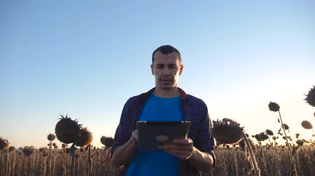 ekili : Farmer agronomist holds tablet touch pad computer in the sunflower field and examining crops before harvesting. Agribusiness concept. Agricultural engineer is walking along a sunflower field.