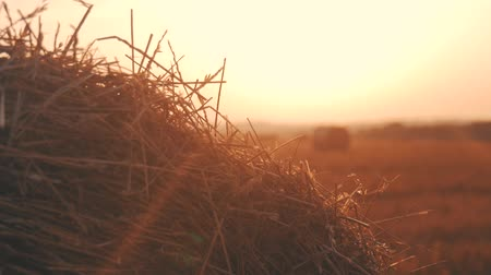 pastry : Stubble field with straw bales under sunset. Stock Footage