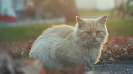 tramp : Old homeless cat on the street. Close-up portrait cat. Cute cat face.