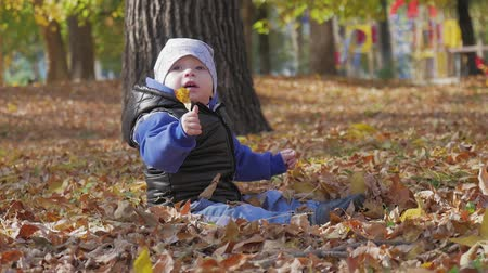 red maple : Little baby boy sitting on grass and fallen leaves in park on bright and sunny early autumn day looking at yellow leaf in hand and smiling. Happy baby boy throws autumn leaves and laughs outdoors.