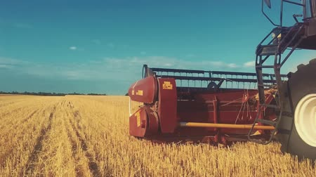 трактор : Combine harvester gathers the wheat crop. Wheat harvesting shears. Combines in the field Food industry concept.