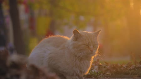 кошачий : Old homeless cat on the street. Close-up portrait cat. Cute cat face.