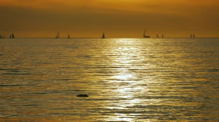yatçılık : Sailboats with white sails at sunset. Beautiful view of sailing yachts in sea at sunset. Stok Video