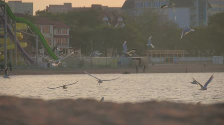 gaivota : Seagull in flight above the sea water surface. Shot in slow motion.
