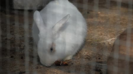 kürklü : White rabbit in the zoo.