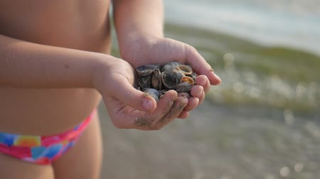 po : Happy little girl enjoying summer vacation collecting seashells. Seashell in girl hands close up.
