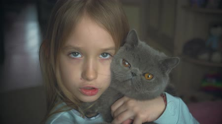 de raça pura : The pretty girl plays with a gray cat at home. Exotic shorthair cat.