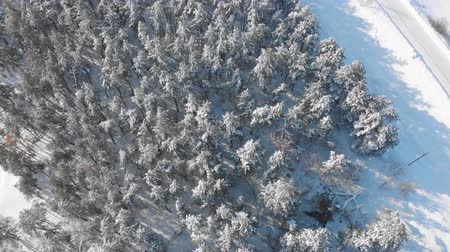 ladin : Aerial view low flight over snowy spruce forest in winter. Aerial shot large pine forest covered with snow at winter. Stok Video