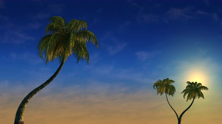 exotikou : Tropical sunset and palm trees in the wind, 3d animation