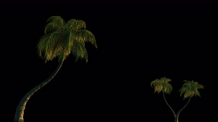 exotikou : Palm trees in the wind, 3d animation with alpha channel. File format-mov, codec PNG + Alpha