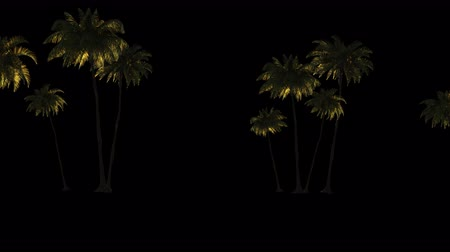 exotikou : Many palm trees in the wind, 3d animation with alpha channel. File format-mov, codec PNG + Alpha