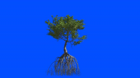 savana : Mangrove with roots. Animation 3d.