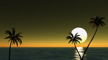 exotikou : Sun and palm trees on the beach near the sea, time-lapse