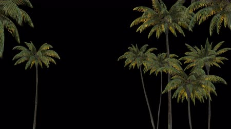 3d rendering palm trees on transparent background. Mov codec png with alpha channel Стоковые видеозаписи