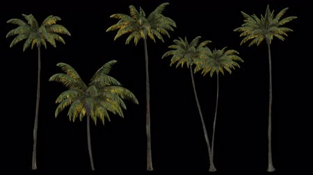 png : 3d rendering palm trees on transparent background. Mov codec png with alpha channel Stock Footage