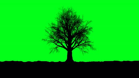 Dried tree in the green screen. 3d rendering, alpha channel Стоковые видеозаписи