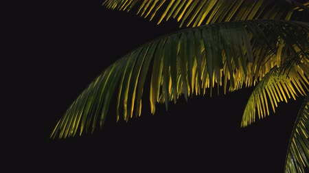 отель : 3d animation. Palm tree branch on a transparent background in the wind. Keying alpha channel PNG Стоковые видеозаписи