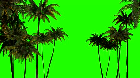png : 3d animation for keying, three palm trees on a green chromakey Stock Footage