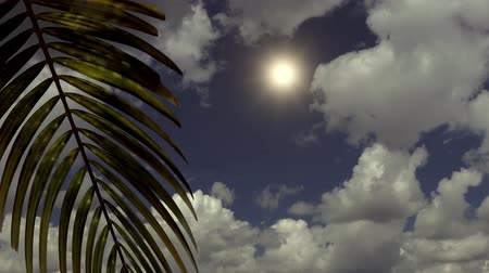 exclusivo : Branch with palm tree leaves on a background of sea and clouds. 3d animation Stock Footage