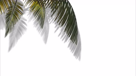 Branch with palm tree leaves on a background of sea and clouds. 3d animation Vídeos