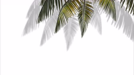 Branch with palm tree leaves in the wind on a white background. 3d animation Vídeos