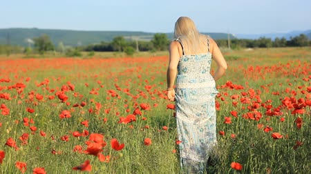 haşhaş : girl on the summer  red poppy fild Stok Video