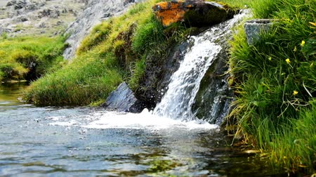 strumień : Small stream with fresh cold clear water in Altai mountains Wideo