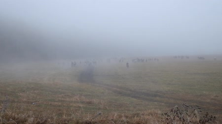 ouvido : Heard of horses in Altai fields draw away under morning mist